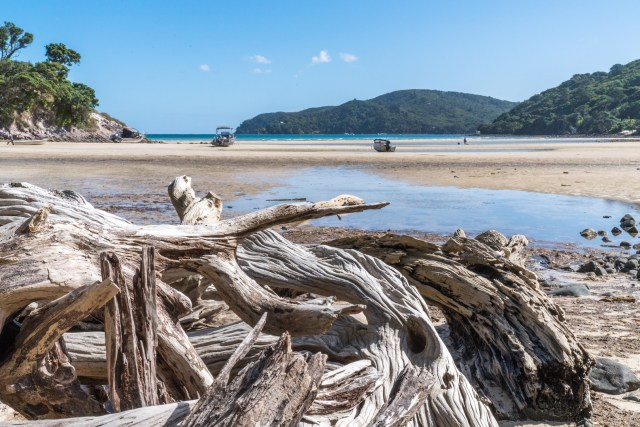 Driftwood at Low Tide at Tryphena Beach on Great Barrier Island, Aotea