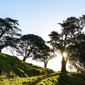 Mangere Mountain Trees, Grass and Sunset - Street Photography Auckland