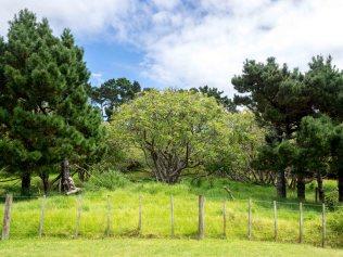 Auckland Public Avocado Orchard Otuataua Stonefields