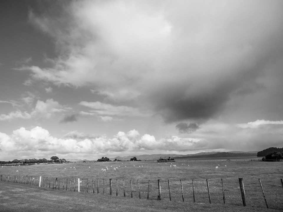 Clouds and Sheep in Ambury Regional Park