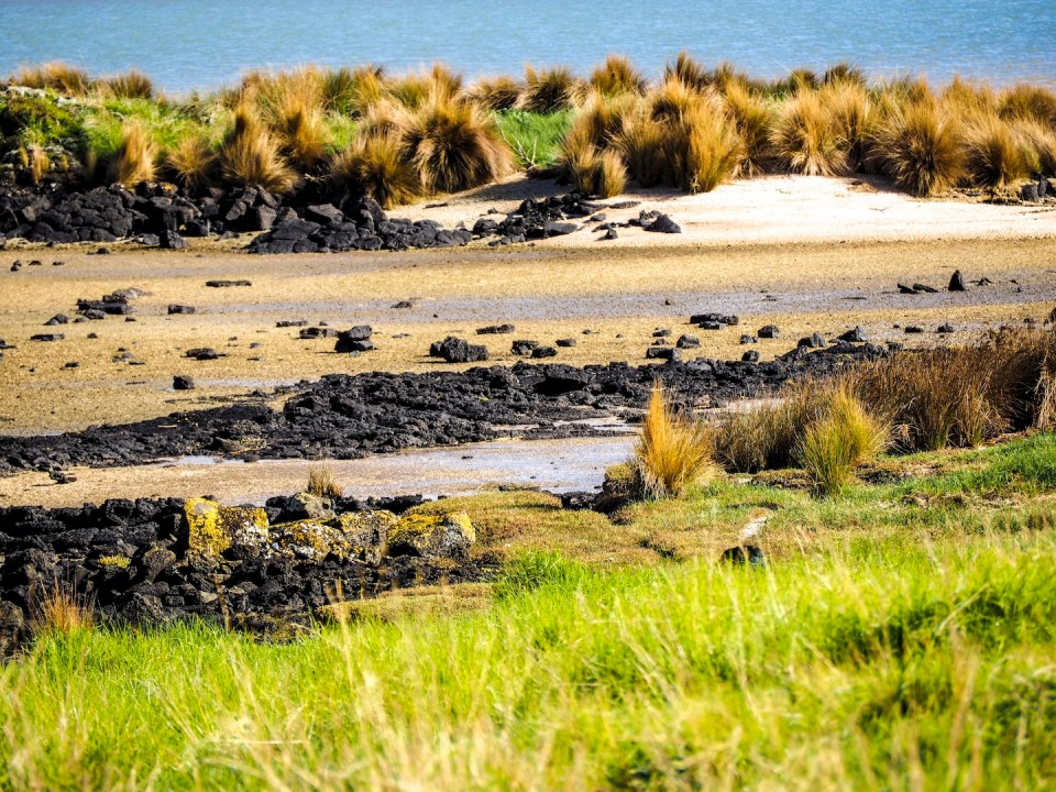 Ambury Park Wetlands - South Auckland Landscape Photography