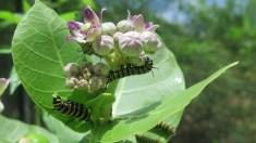 butterfly-farm1