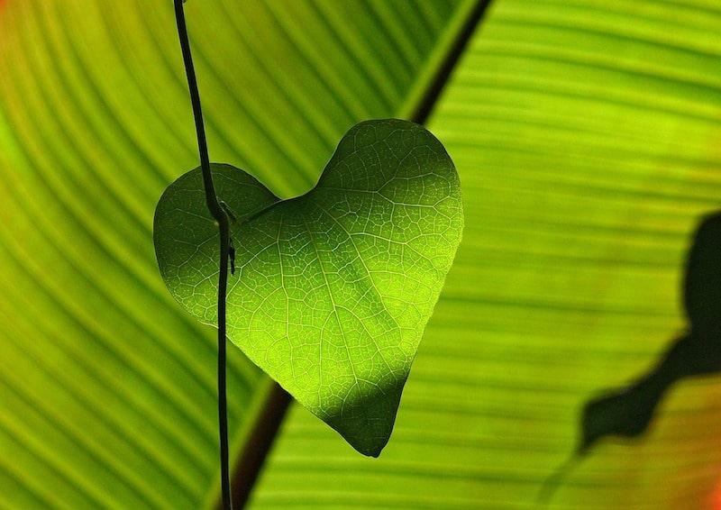 Soins énergétiques Au Coeur de l'Eveil
