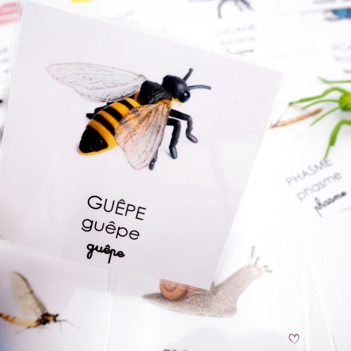 cartes nomenclature insectes