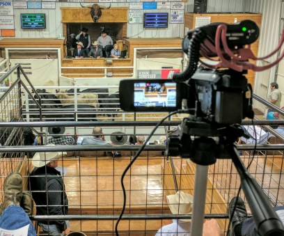 Streaming the KAA livestock contest