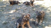 Last photo of the whole litter together!