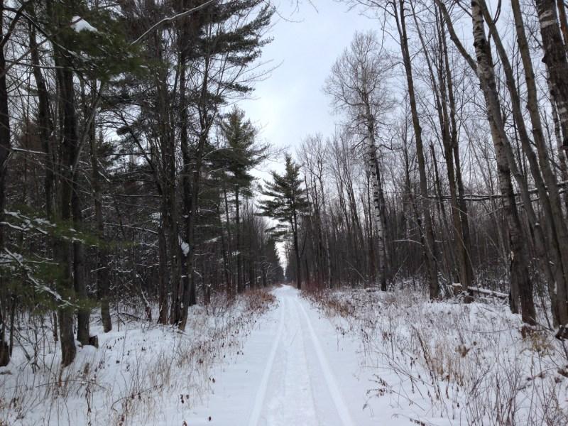 Forêt Larose