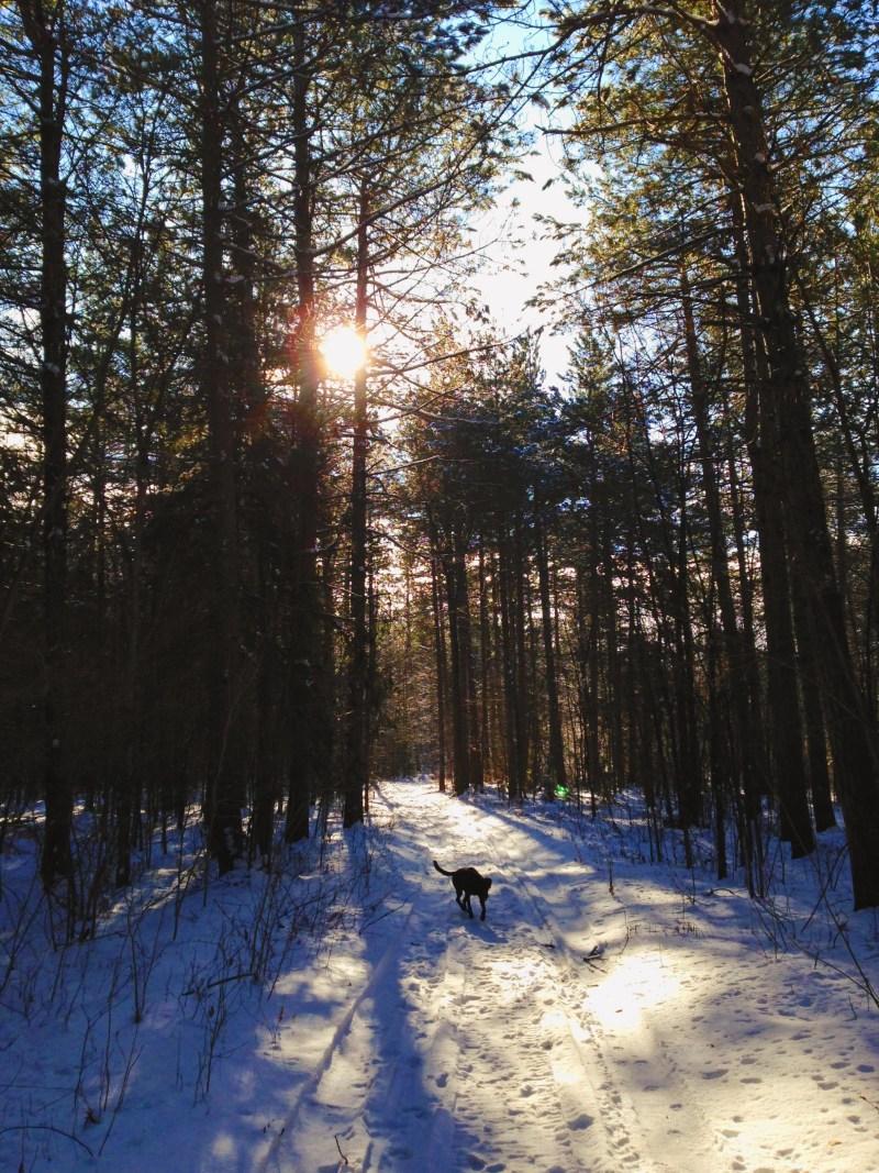 Forêt Warwick
