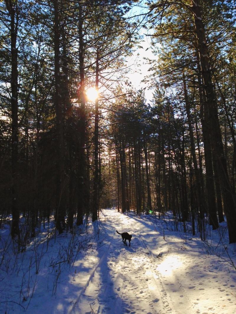 Warwick Forest