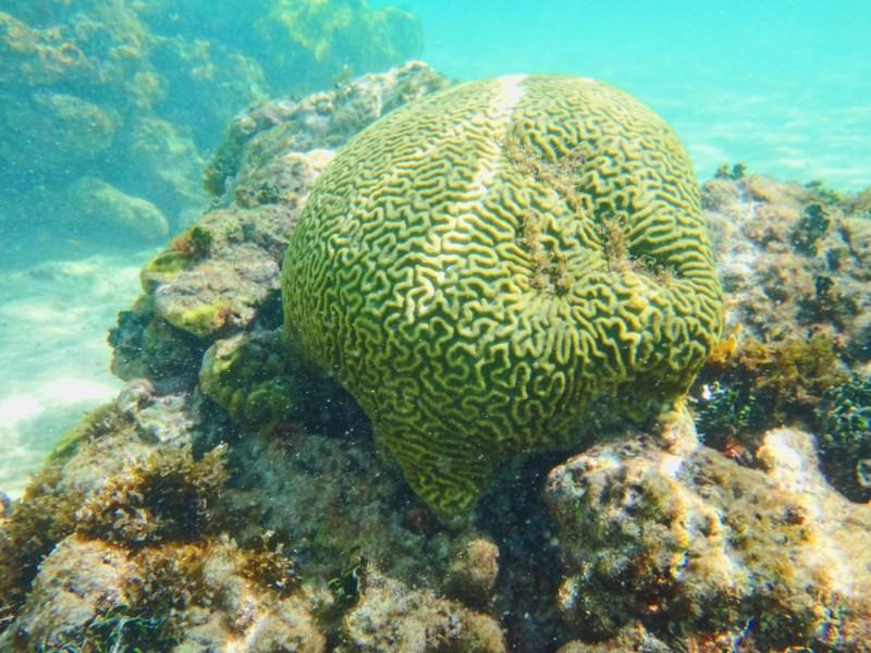 Un corail à San Andres
