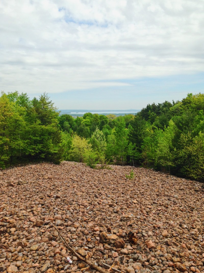 Potato Field in Rigaud