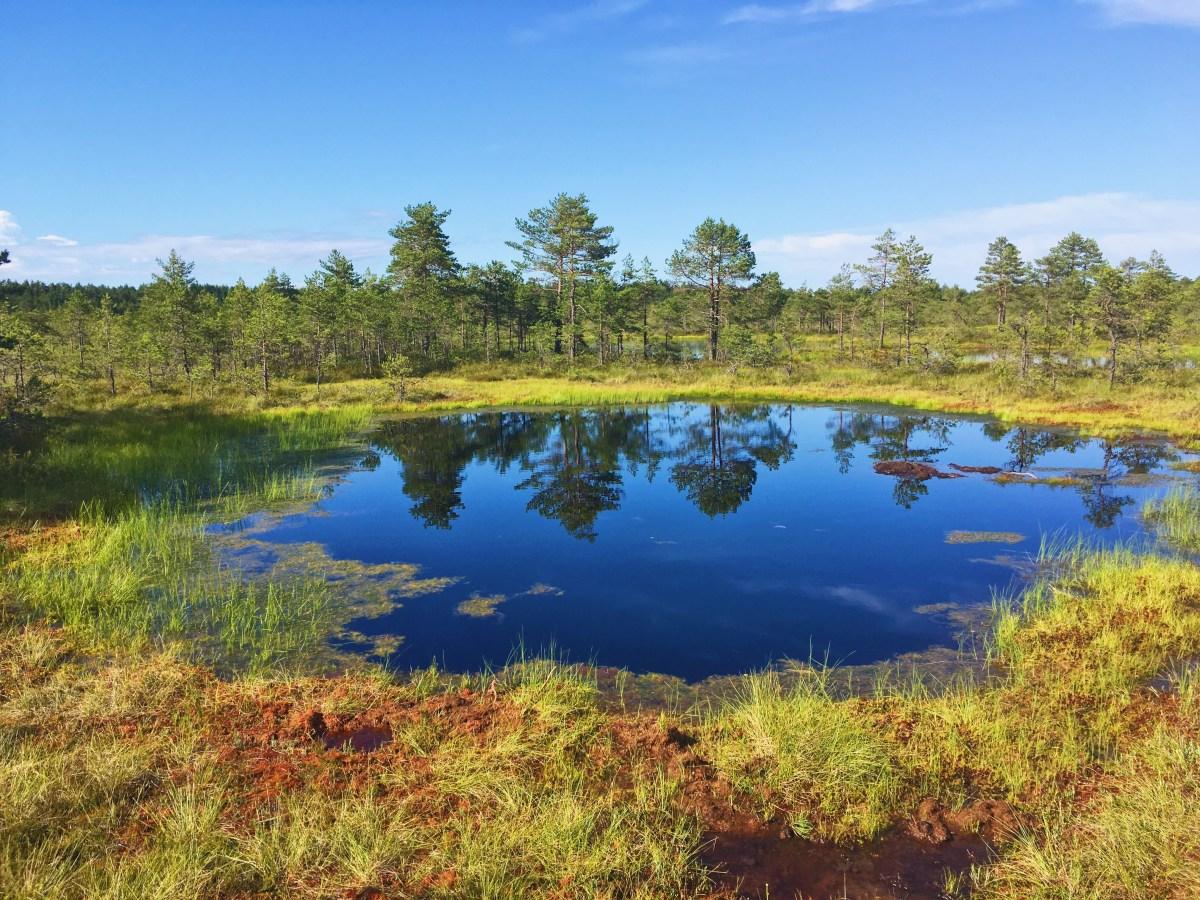 Lahemaa - coup de coeur pour la nature estonienne