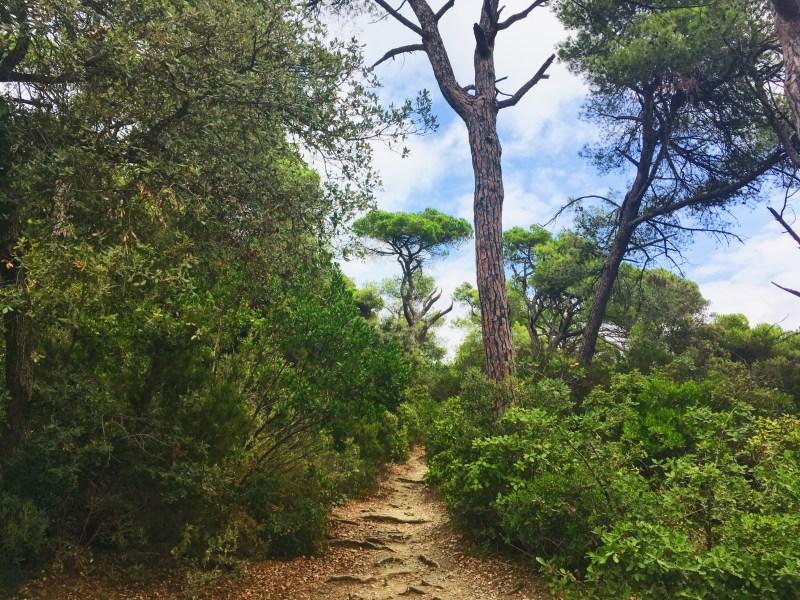 Parc Natural de la Serra de Collserola