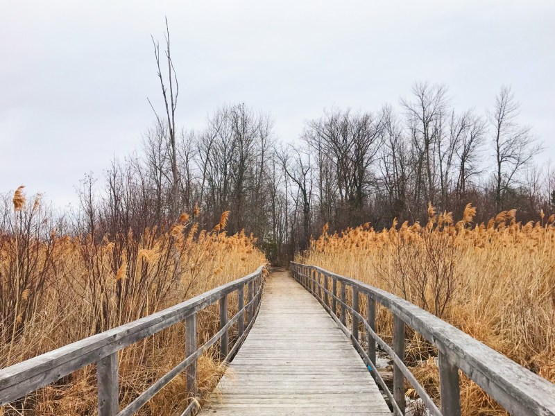 April walk at Cooper Marsh