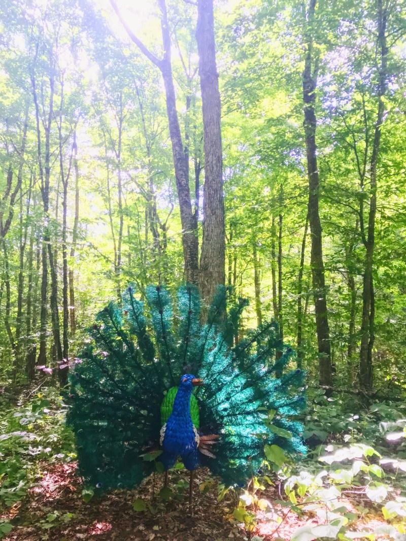 Peacock art work