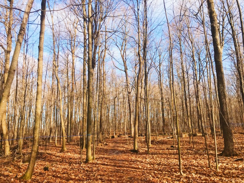 Forêt Oschmann