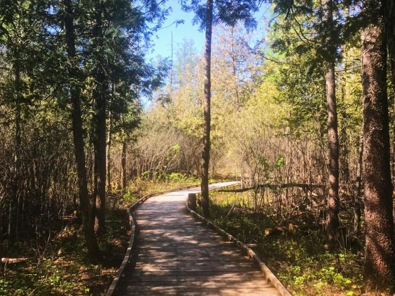 Findlay Creek Boardwalk