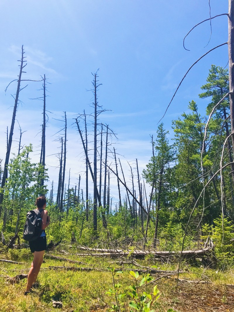 Parc provincial Burnt Lands