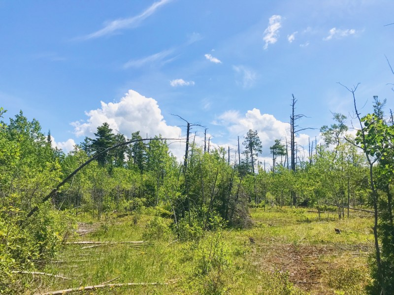 Burnt Lands Provincial Park
