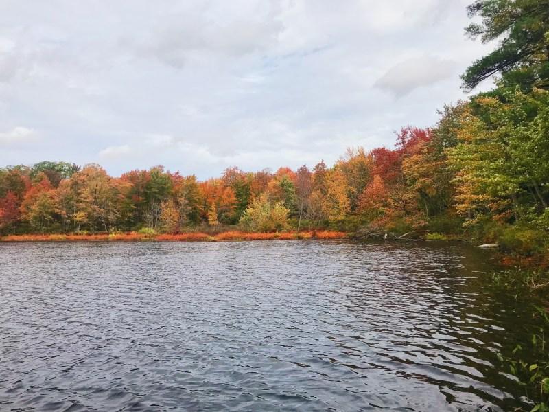 Lac Beaver