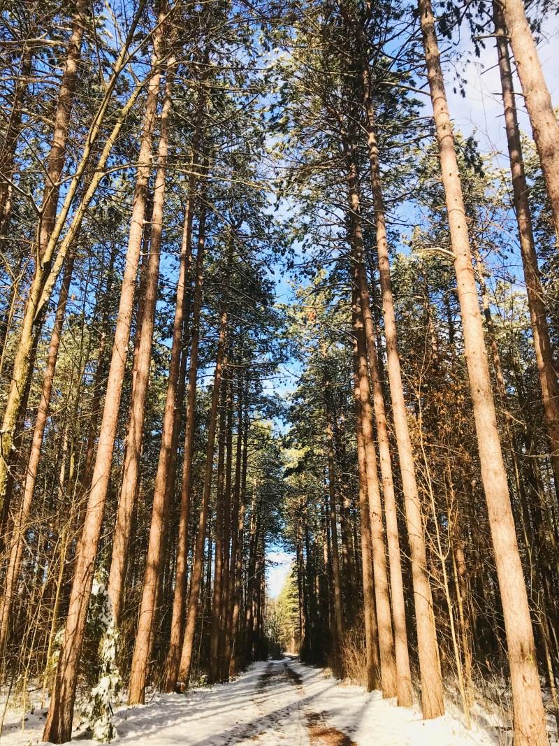 Chalet Loop à la forêt Limerick