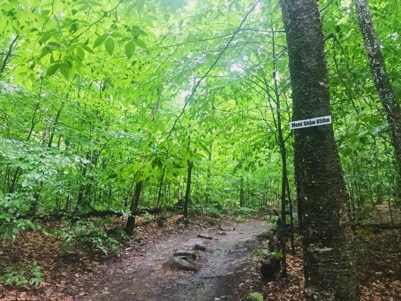 Sentier du mont Shaw