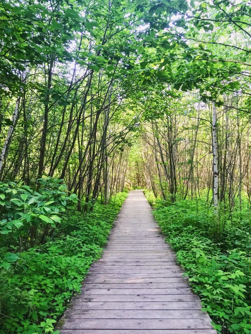 Parc naturel de la Tourbière-du-Bordelais