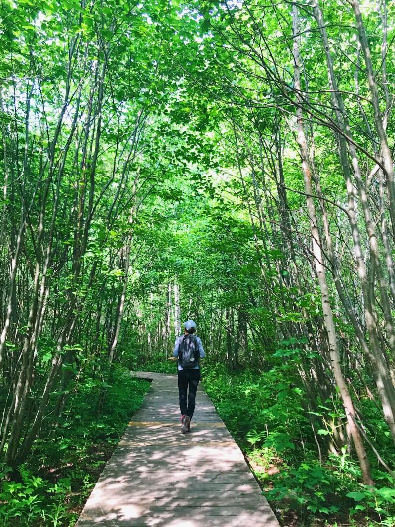 Natural Park of Bordelais Bog