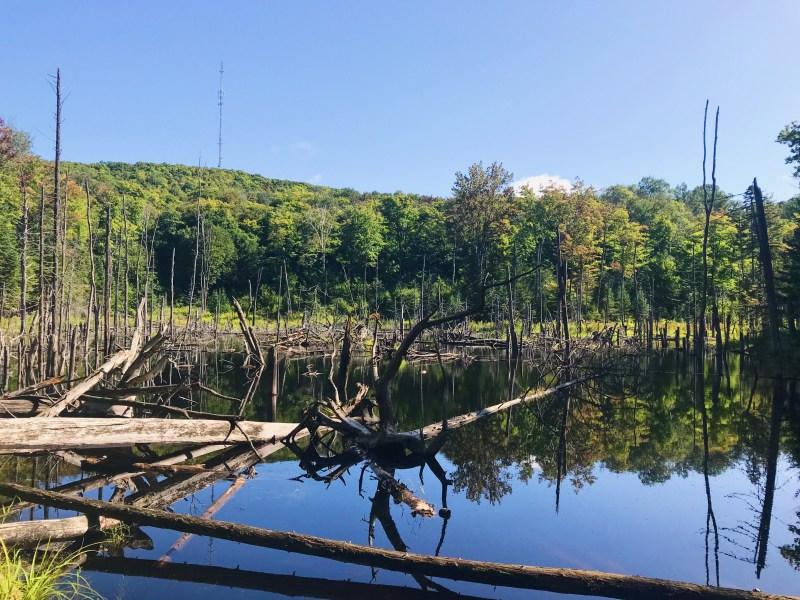 Beaver Pond on Nid de l'Aigle trail