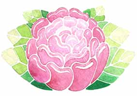 fleur-pivoine-rose-illustration-aude-villerouge.jpg