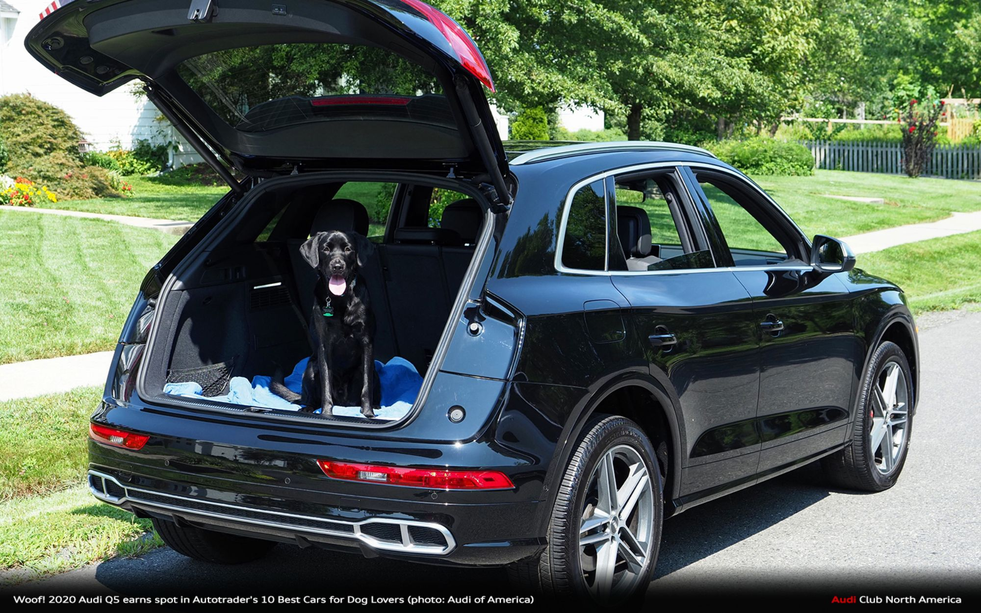 Woof! 2020 Audi Q5 Earns Spot in Autotrader's 10 Best Cars for Dog Lovers