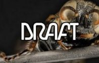 Sonic Academy – Interview – Draft