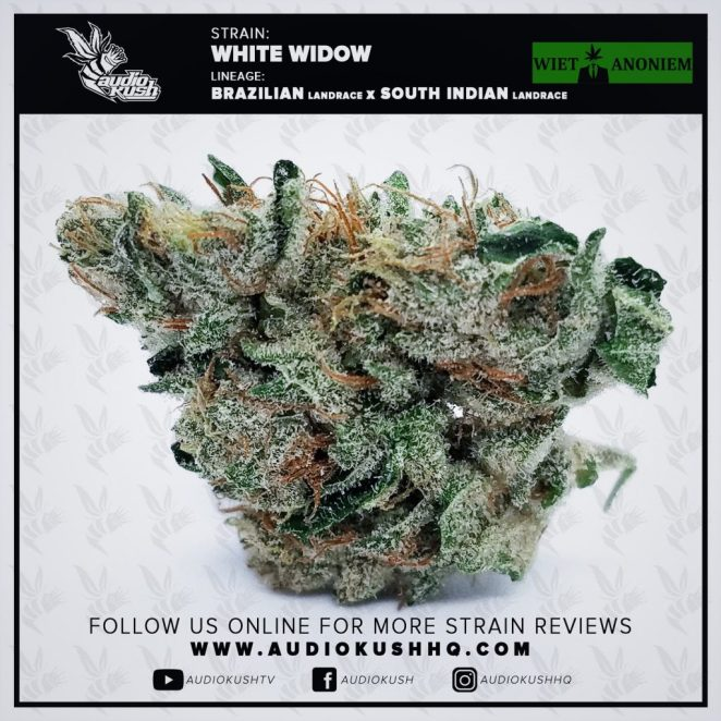 White Widow is a 60/40 hybrid strain that gained popularity in the mid-90s after its first (of many) award at High Time Cannabis Cup in 1995, placing 1st in the Bio category. Originally bred by Green House Seeds in Amsterdam, has become a staple in not only Dutch coffeeshops, but around the globe. White Widow's compacted buds, covered in robust white trichomes, have a faint earthy scented fragrance. When broken up you can get a nice whiff of the intoxication that is to come.