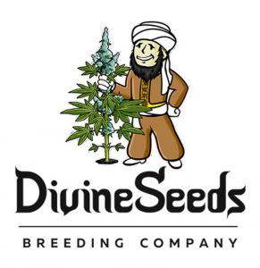 divine seed squish the summer high gold sponsor logo