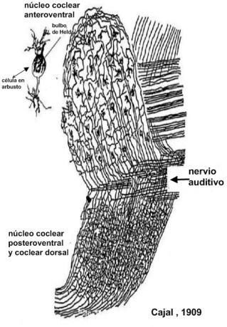 nucleo-coclear-copia