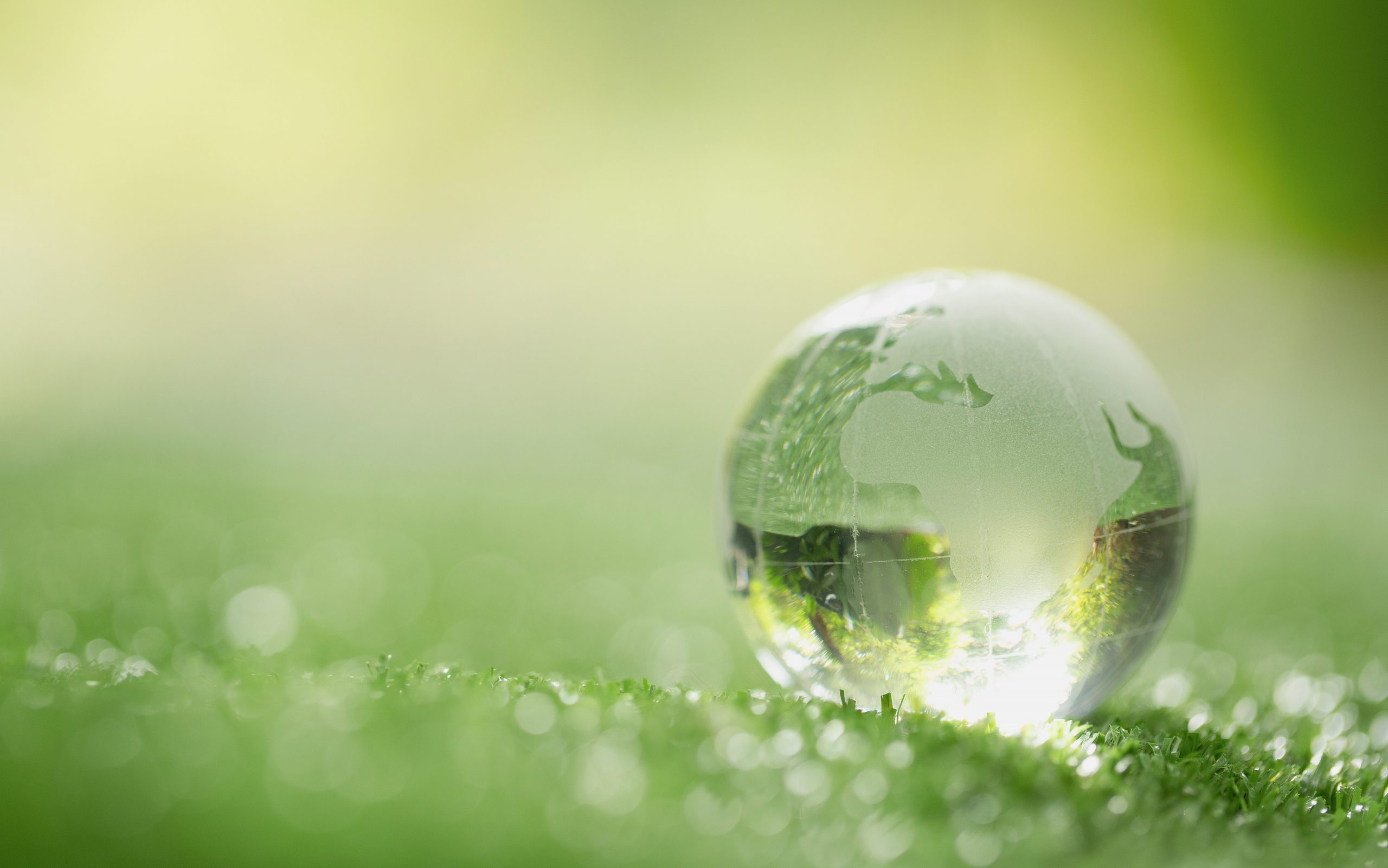 Close up of crystal globe resting on grass in a forest – environ