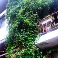 "The vines outside a very cute second-story cafe called ""Keyf Konağı."""