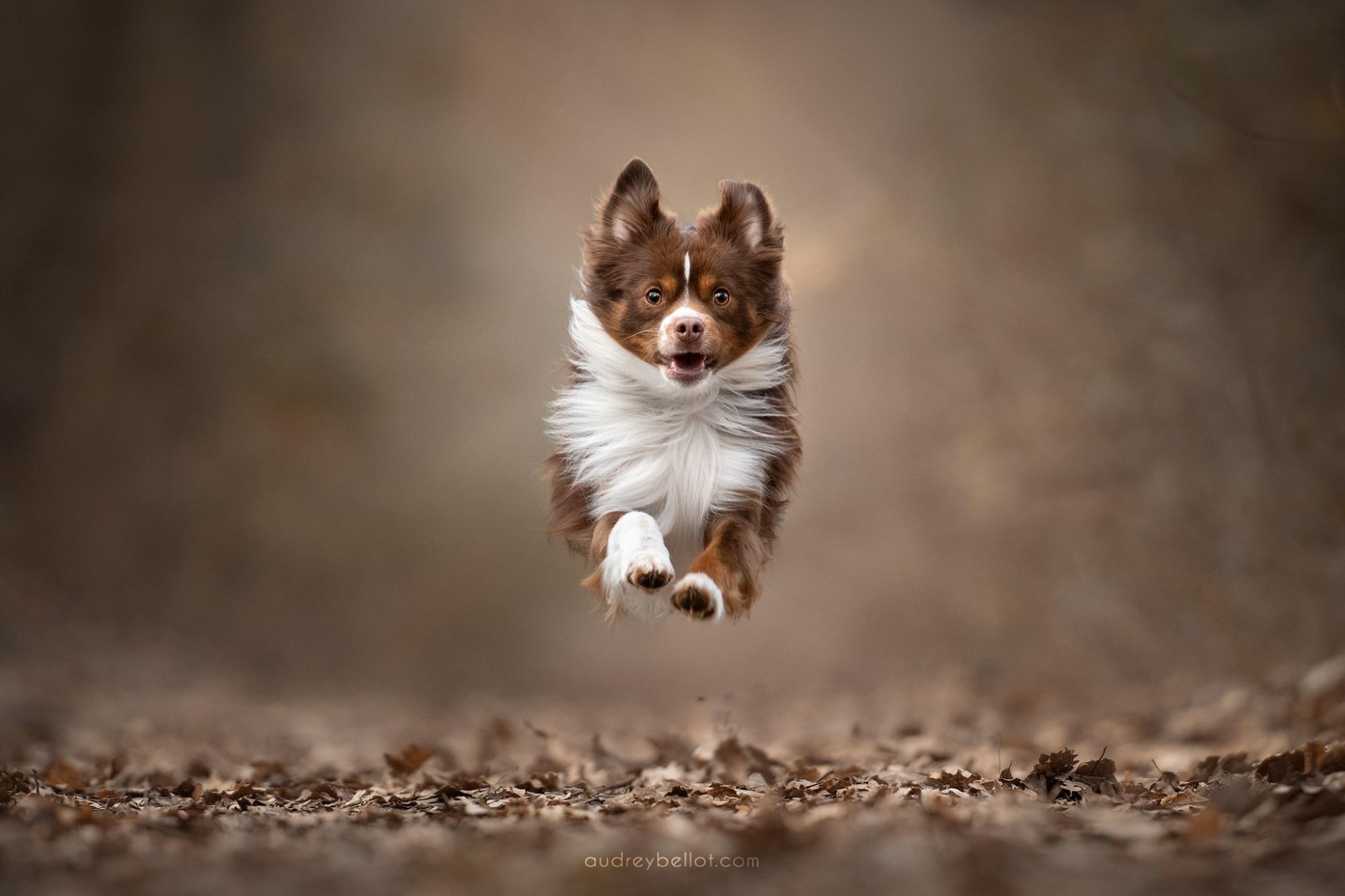 Stages Photo Chien Workshop photographie canine Audrey Bellot
