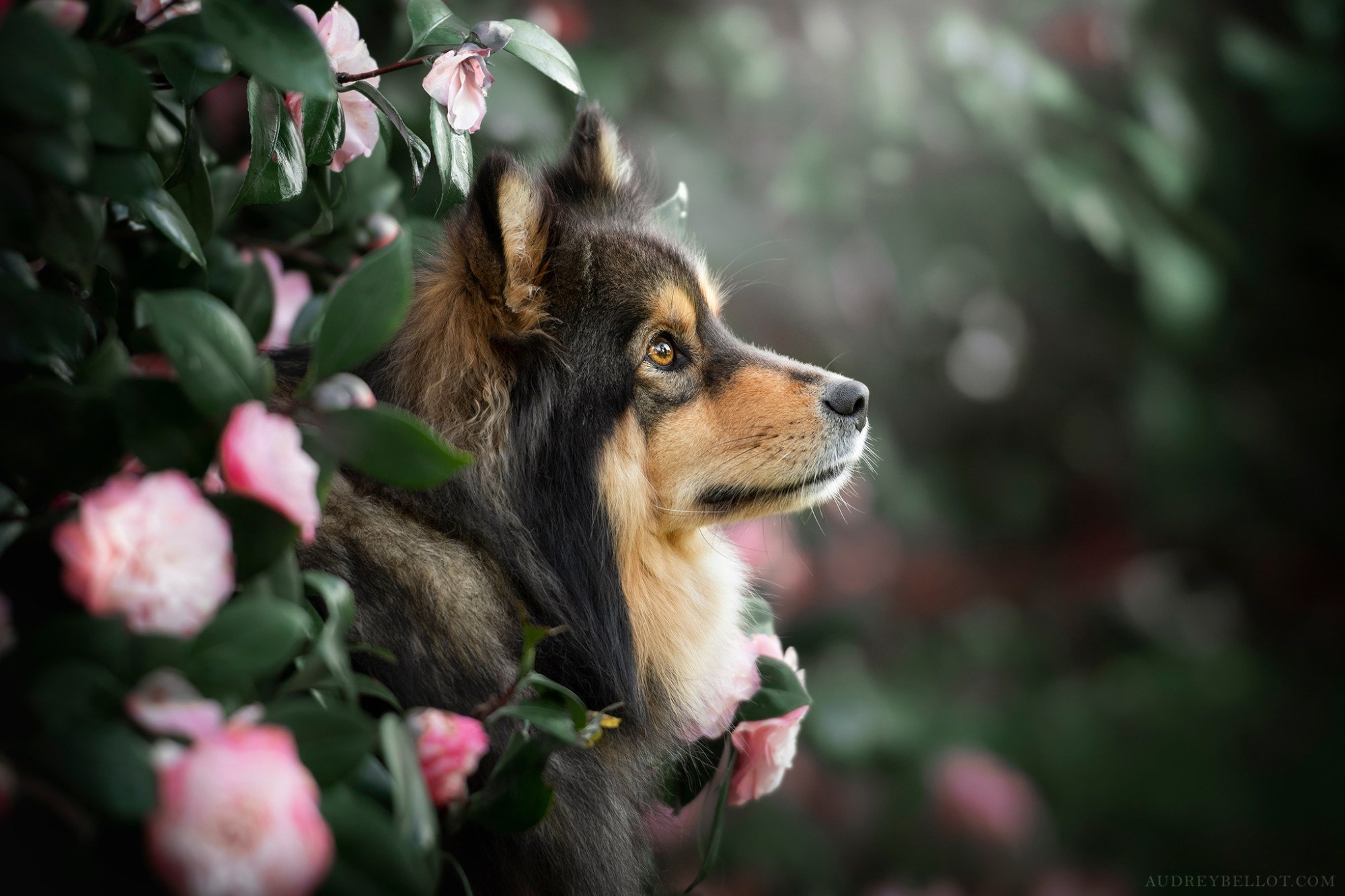 Stages Photo Chien Workshop photographie canine Audrey Bellot