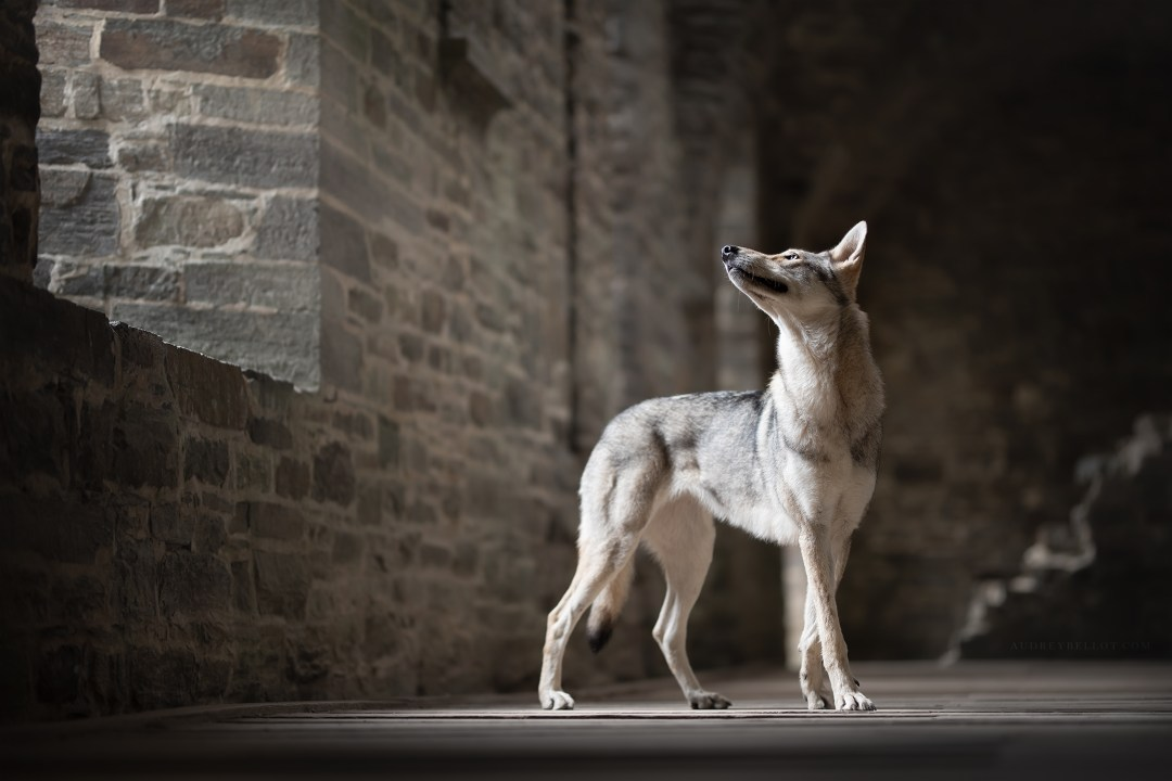 Workshop Photographie Canine Dog Photography Workshops with Ria Putzker Audrey Bellot Belgium