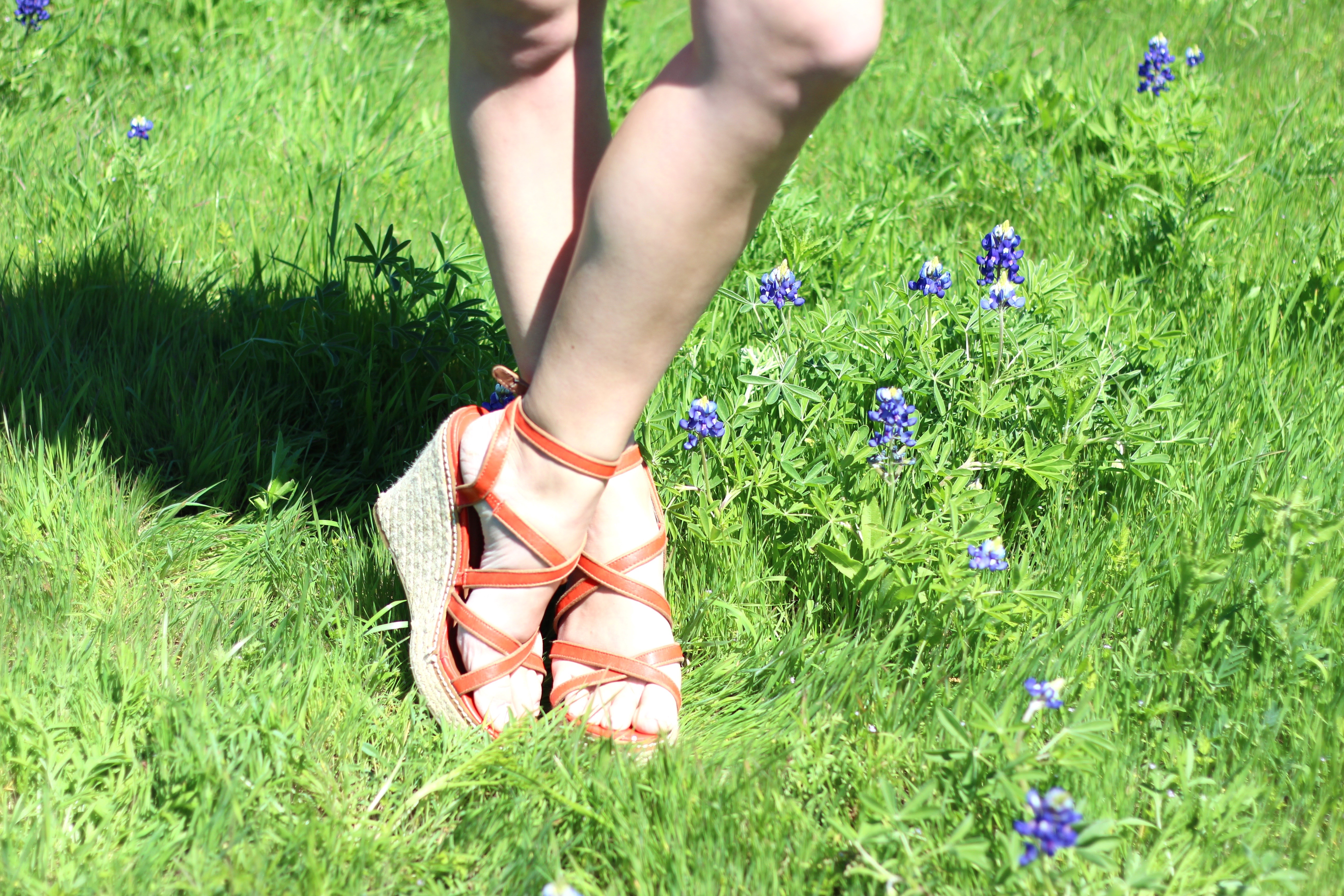 summer orange wedges