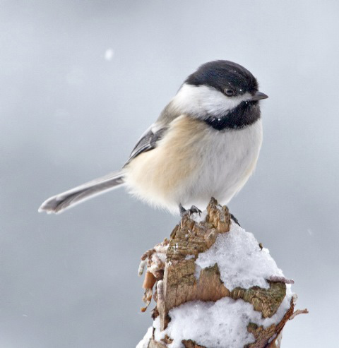 Audubon Nature Center Supports Fall Regional Bird Count
