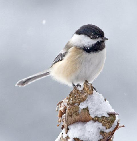 Audubon Nature Center Supports Fall Regional Bird Count