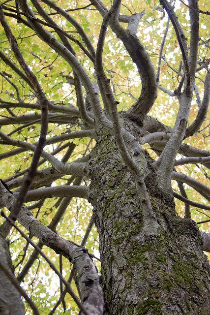 Tree by Jennifer Schlick