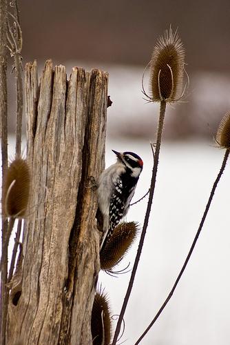 Audubon's Christmas Bird Count in Warren and Jamestown, December 17 and 18