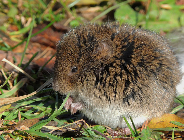 Small Mammals by Katie Finch