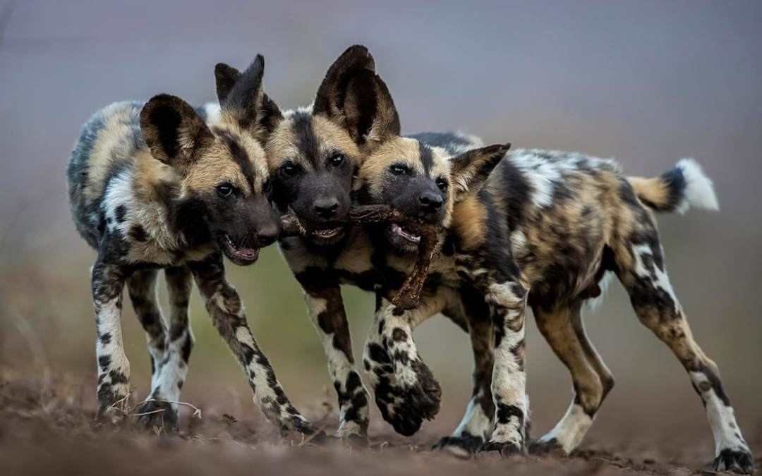 International Winners in Audubon Community Nature Center's 2018 Nature Photo Contest