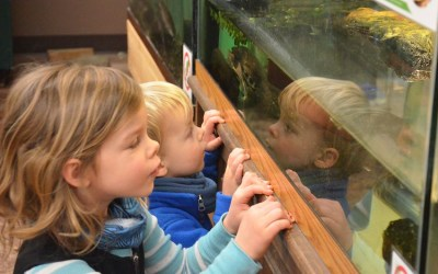 Nature Center Partial Reopening to Daily Visitors – Starting Saturday, September 5