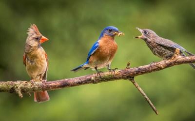 Audubon Bird Series Closing Saturday, September 5