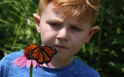 Multiple Audubon Opportunities to Learn to Raise Monarchs
